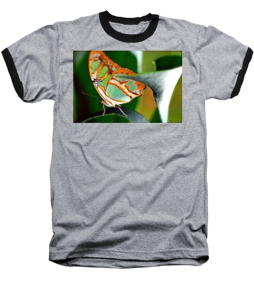 Baseball T-Shirt featuring the photograph Dido Longwing Butterfly by Peggy Franz