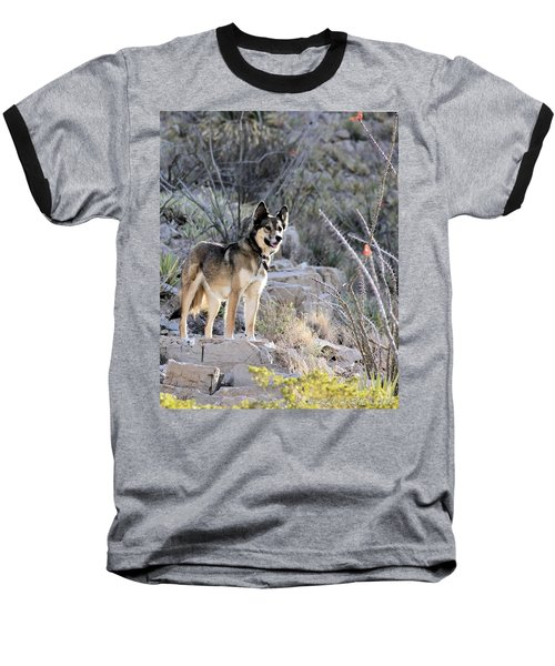 Dog In The Mountains Baseball T-Shirt