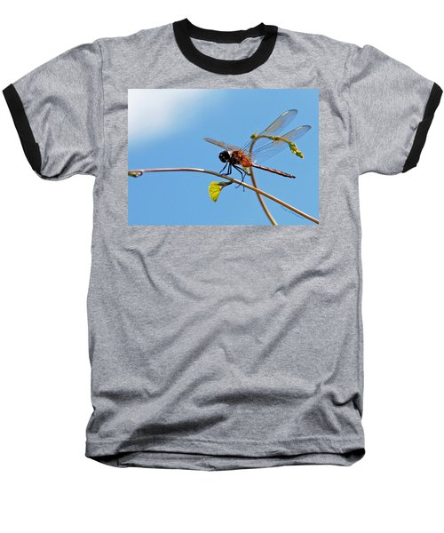 Dragonfly On A Vine Baseball T-Shirt