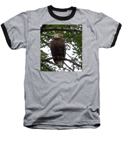 Baseball T-Shirt featuring the photograph Eagle At Hog Bay Maine by Francine Frank