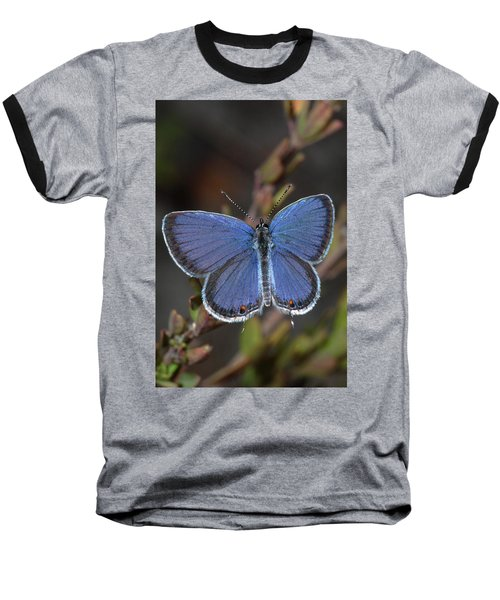 Eastern Tailed Blue Butterfly Baseball T-Shirt