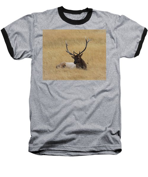 Baseball T-Shirt featuring the photograph Elk In The Meadow by Steve McKinzie