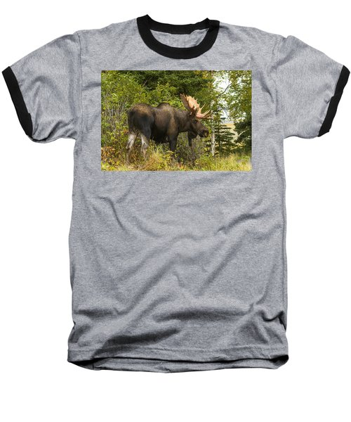 Fall Bull Moose Baseball T-Shirt