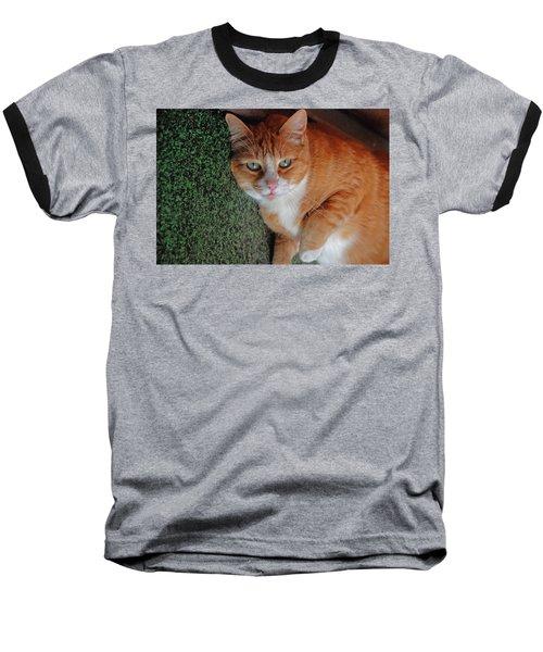 Fat Cats Of Ballard 6 Baseball T-Shirt