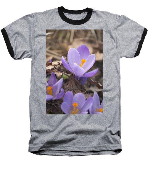 First Crocus Blooms Baseball T-Shirt