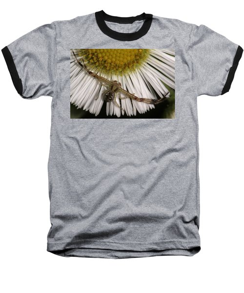 Flower Spider On Fleabane Baseball T-Shirt