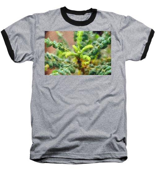 Frankincense Tree Leaves Baseball T-Shirt