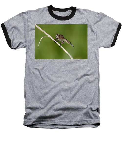 Baseball T-Shirt featuring the photograph Giant Robber Fly - Promachus Hinei by Daniel Reed