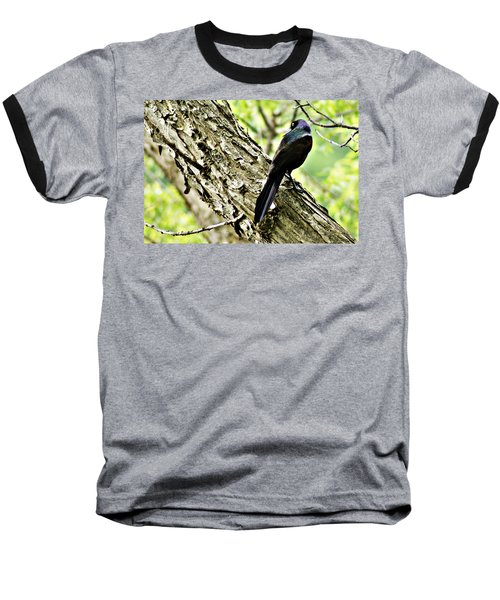Grackle 1 Baseball T-Shirt by Joe Faherty