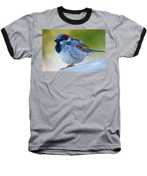 Guard Bird Baseball T-Shirt by Colleen Coccia