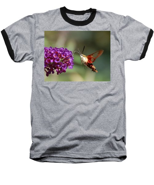 Hummingbird Moth Baseball T-Shirt