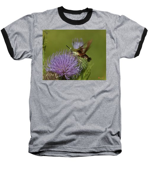 Hummingbird Or Clearwing Moth Din178 Baseball T-Shirt