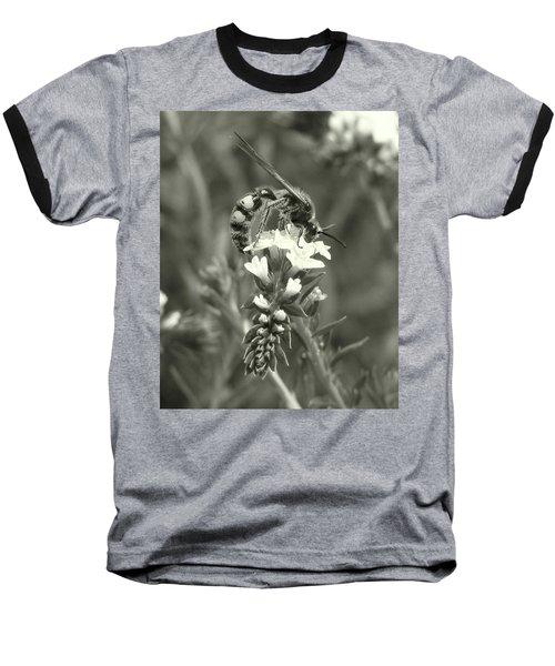 Hunter Wasp On Heliotrope Baseball T-Shirt