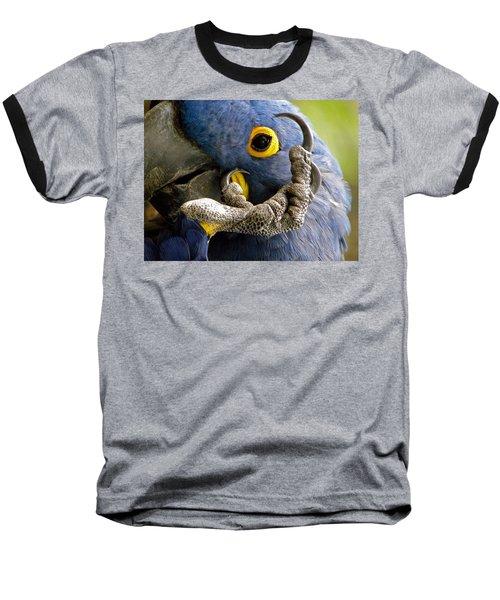 Hyacinth Macaw Baseball T-Shirt