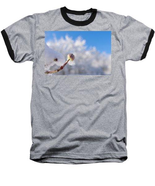 Iced Dogwood Baseball T-Shirt