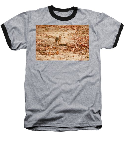 Baseball T-Shirt featuring the photograph Jackal Standing Over Deer Kill by Fotosas Photography