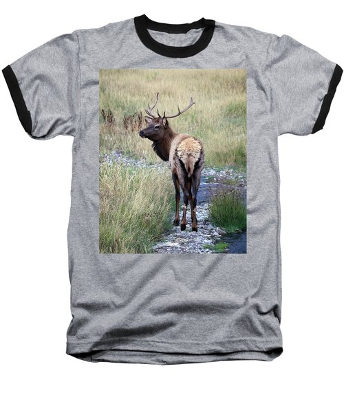Baseball T-Shirt featuring the photograph Looking Back Bull by Steve McKinzie