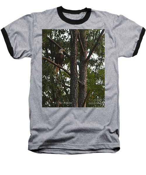 Majestic Bald Eagle Baseball T-Shirt by Clayton Bruster