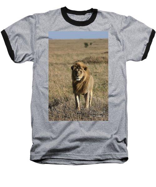 Male Lion's Gaze Baseball T-Shirt by Darcy Michaelchuk