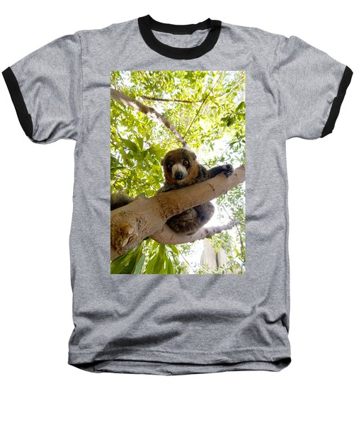 Mongoose Lemur Baseball T-Shirt