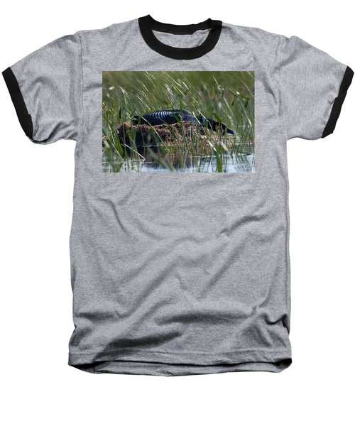Nesting Loon Baseball T-Shirt