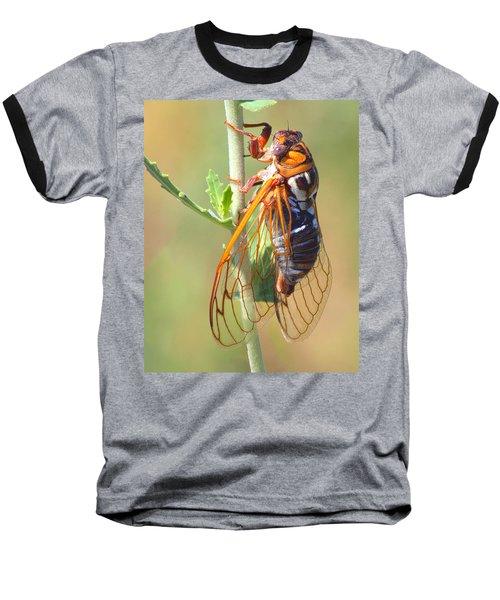 Noisy Cicada Baseball T-Shirt