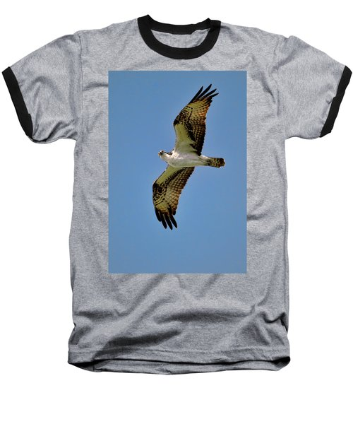 Osprey Above Baseball T-Shirt
