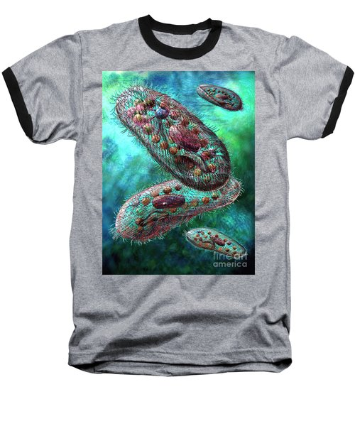 Paramecium Baseball T-Shirt by Russell Kightley