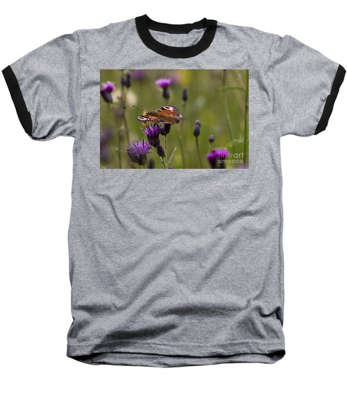 Peacock Butterfly On Knapweed Baseball T-Shirt
