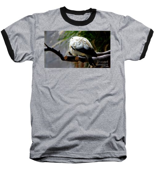 Baseball T-Shirt featuring the photograph Pied Imperial Pigeon by Davandra Cribbie