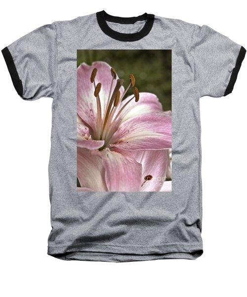 Pink Asiatic Lily Baseball T-Shirt
