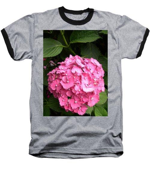 Pink Hydranga Baseball T-Shirt by Claude McCoy
