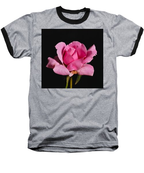 Pink Tea Rose Baseball T-Shirt
