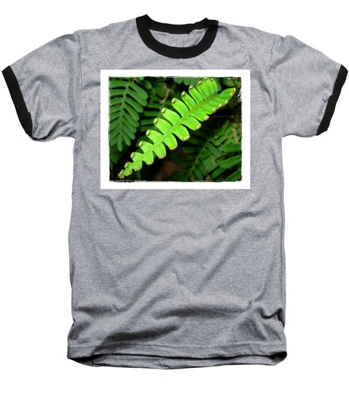 Baseball T-Shirt featuring the photograph Polypody by Judi Bagwell
