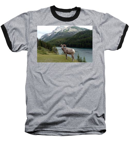 Portrait Of A Bighorn Sheep At Lake Minnewanka  Baseball T-Shirt by Laurel Best