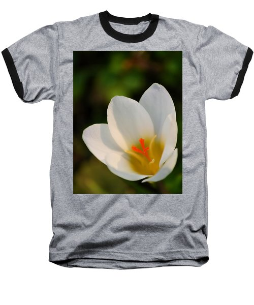 Pretty White Crocus Baseball T-Shirt