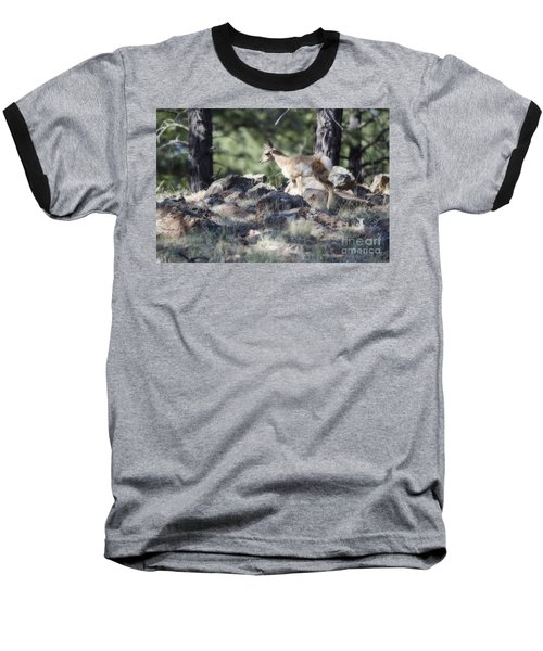 Pronghorn Antelope Fawn Baseball T-Shirt