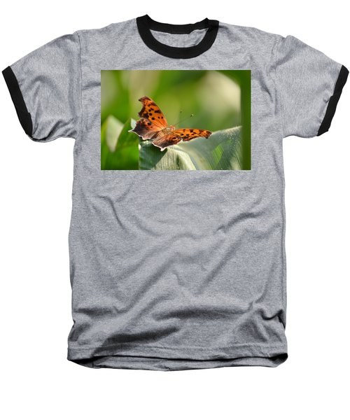 Baseball T-Shirt featuring the photograph Question Mark Butterfly by JD Grimes