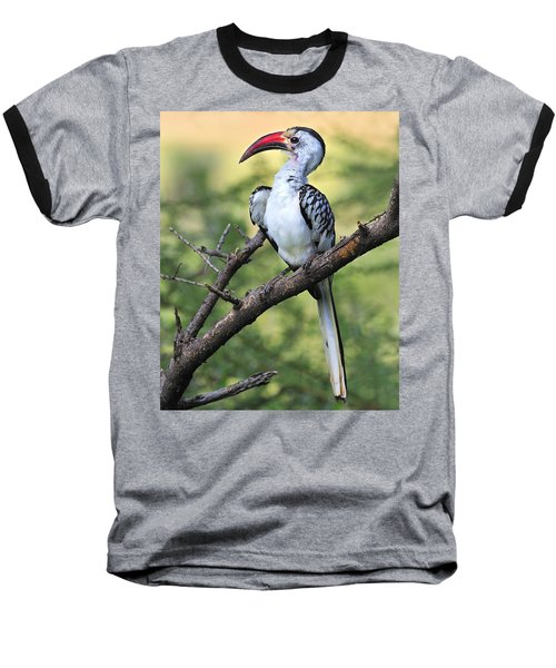 Red-billed Hornbill Baseball T-Shirt