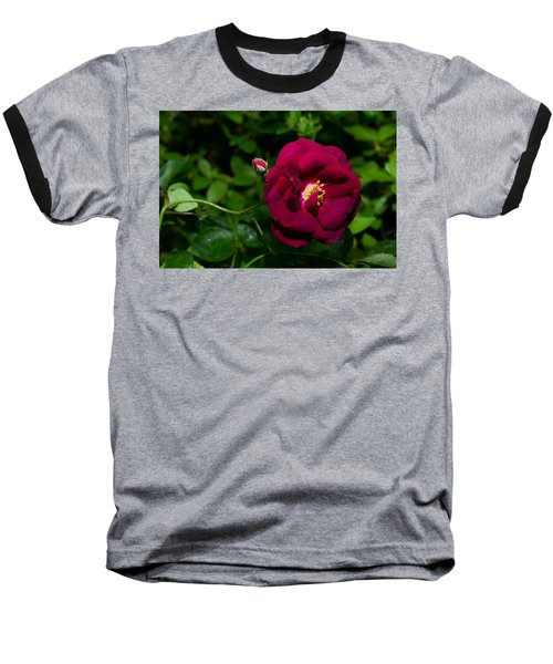 Red Rose In The Wild Baseball T-Shirt