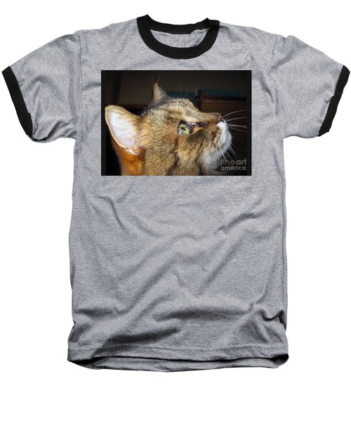 Baseball T-Shirt featuring the photograph Runcius- The King Kitty by Ausra Huntington nee Paulauskaite
