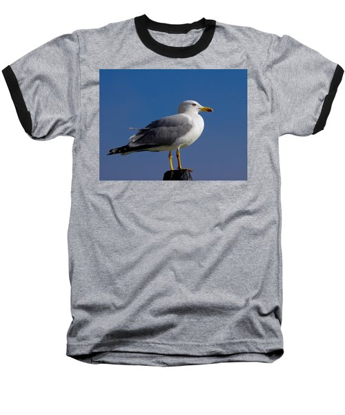 Baseball T-Shirt featuring the photograph Seagull by David Gleeson