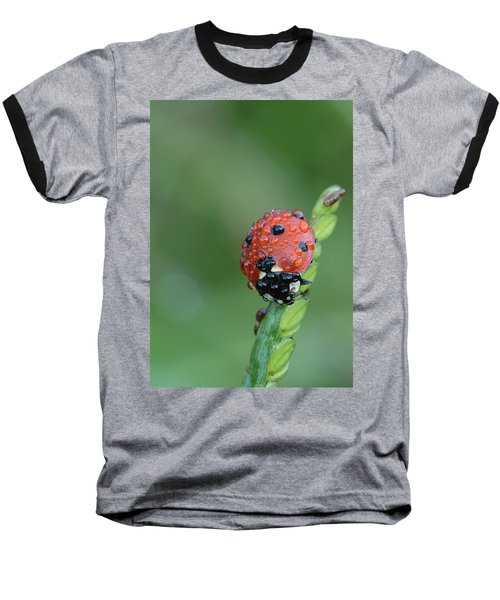 Seven-spotted Lady Beetle On Grass With Dew Baseball T-Shirt