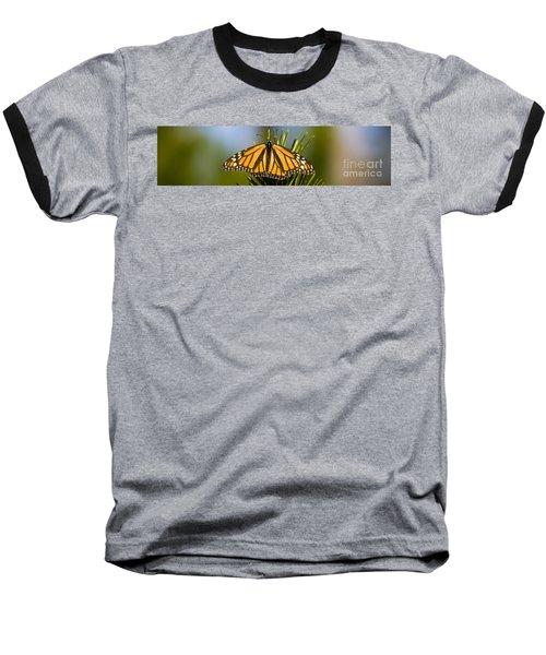 Single Monarch Butterfly Baseball T-Shirt by Darcy Michaelchuk