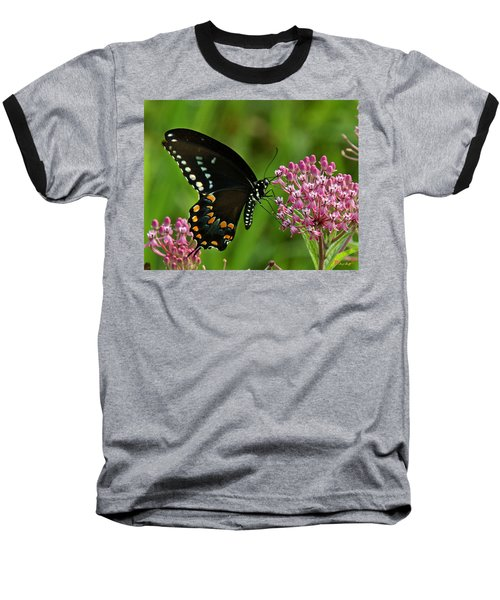 Spicebush Swallowtail Din039 Baseball T-Shirt by Gerry Gantt