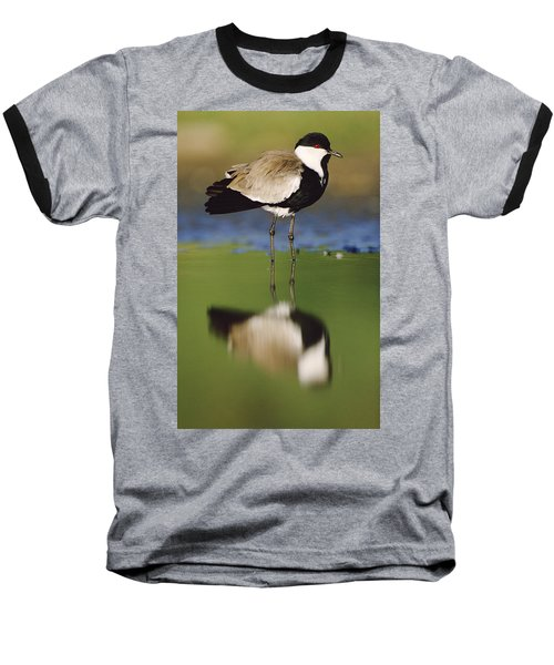 Spur Winged Plover With Its Reflection Baseball T-Shirt by Tim Fitzharris