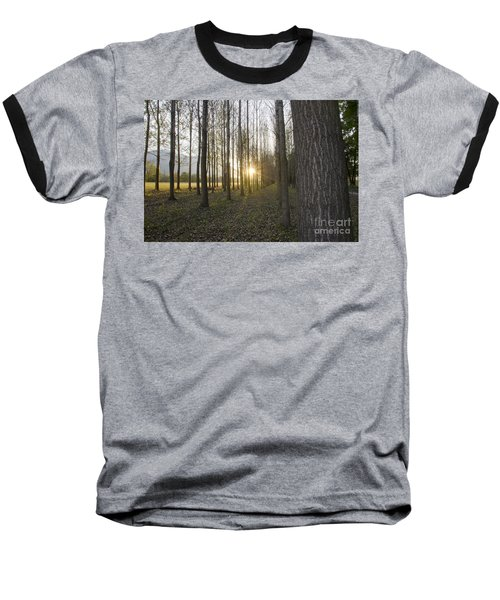 Sunlight In The Forest Baseball T-Shirt