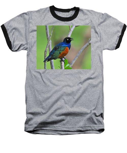 Superb Starling Baseball T-Shirt
