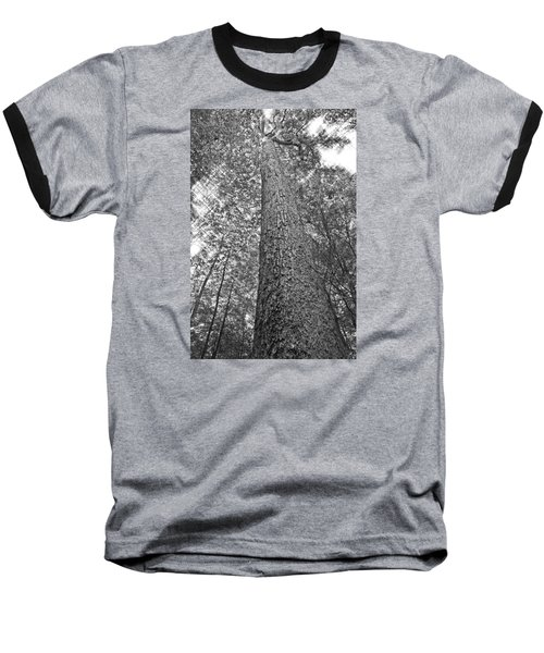 Baseball T-Shirt featuring the photograph Tall Tree With Sunshine by Susan Leggett