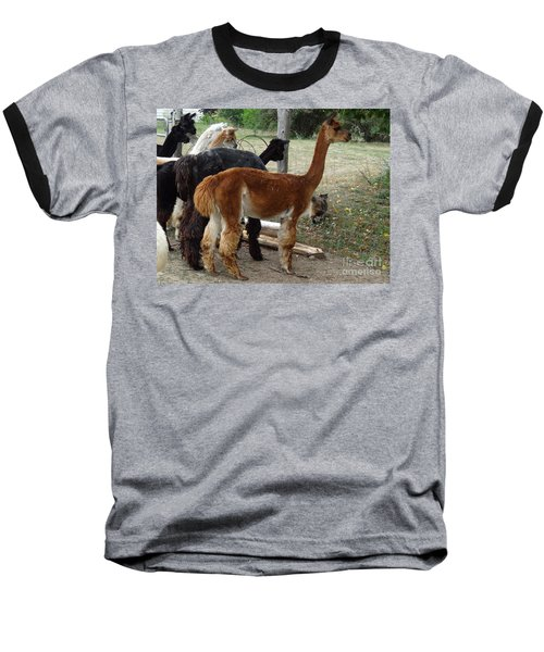 The Cat Came Back Baseball T-Shirt by Laurel Best